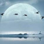 The Lunar Matrix grids of Light