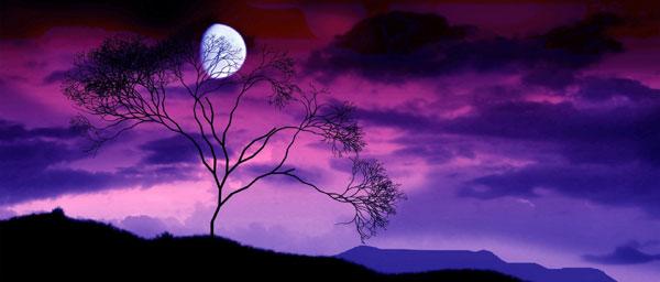 Last Quarter Moon Bodhi Prana Tree